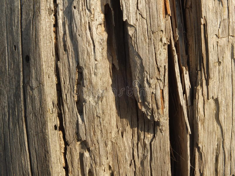 Ruttet trä royaltyfria foton