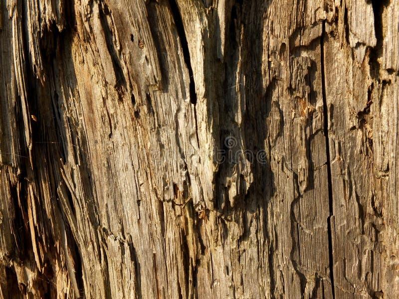 Ruttet trä fotografering för bildbyråer