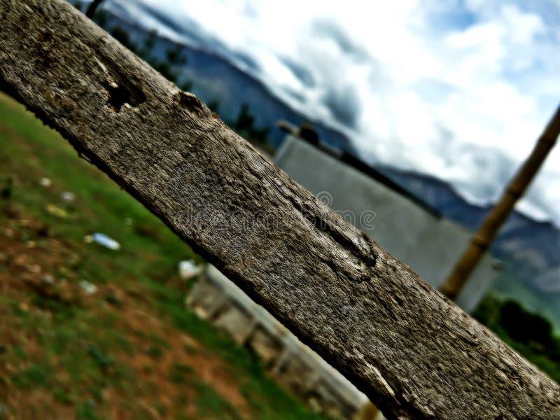Ruttet trä royaltyfri foto