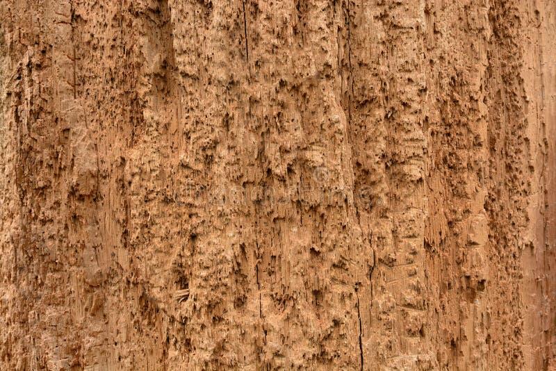 Ruttet trä för bakgrund arkivfoton