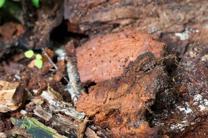 Ruttet trä i skogcloseup arkivbilder