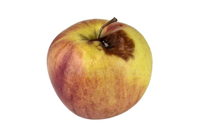 Ruttna Apple som isoleras på vitbakgrund arkivfoto