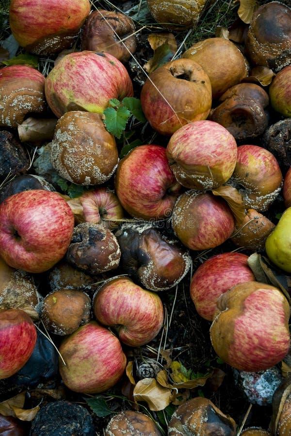 ruttna för äpplen arkivfoto