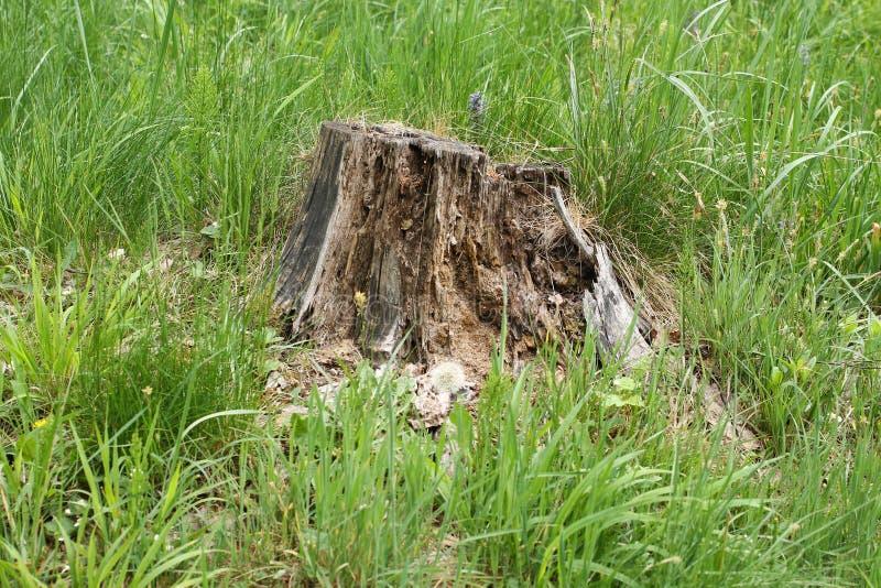 Ruttna kvarleva av ett träd royaltyfri bild