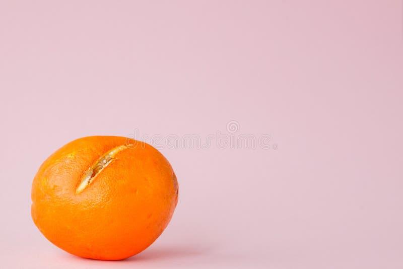 Ruttna mögliga apelsiner, tangerin på rosa bakgrund Ett foto av den växande formen Matförorening, dåligt bortskämt äckla arkivbild