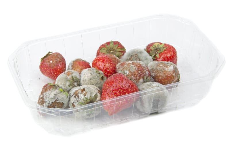 Ruttna mögliga jordgubbar arkivfoto