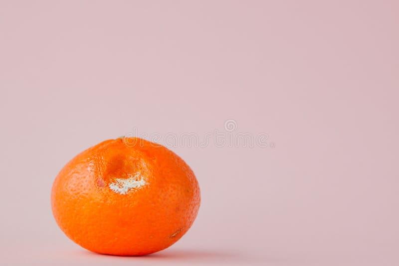 Ruttna m?gliga apelsiner, tangerin p? rosa bakgrund Ett foto av den v?xande formen Matf?rorening, d?ligt bortsk?mt ?ckla royaltyfri bild