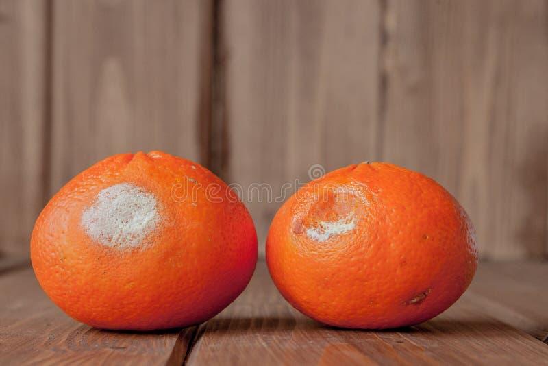 Ruttna m?gliga apelsiner, tangerin p? tr?bakgrund Ett foto av den v?xande formen Matf?rorening, d?ligt bortsk?mt ?ckla royaltyfri fotografi