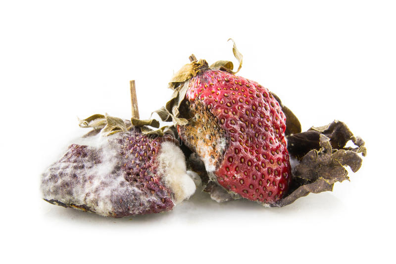 Ruttna strawberrys royaltyfri foto