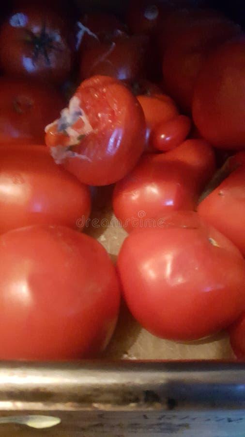 Ruttna tomater på linjen panna royaltyfri foto