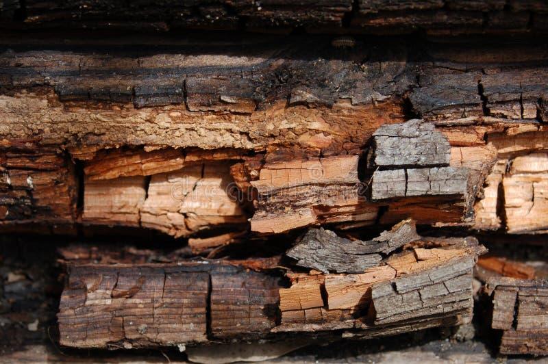 ruttna trä royaltyfri foto