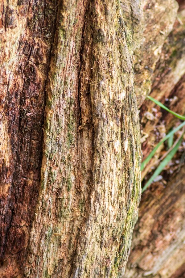 Ruttna trädet arkivbild