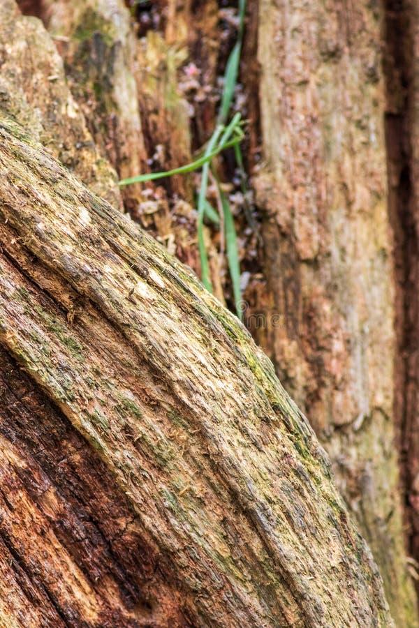 Ruttna trädet royaltyfri bild