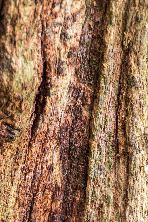 Ruttna trädet arkivfoto