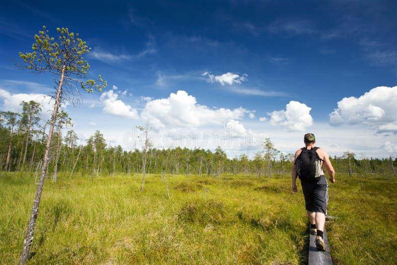 Am ruunaa wandern, Finnland lizenzfreies stockfoto
