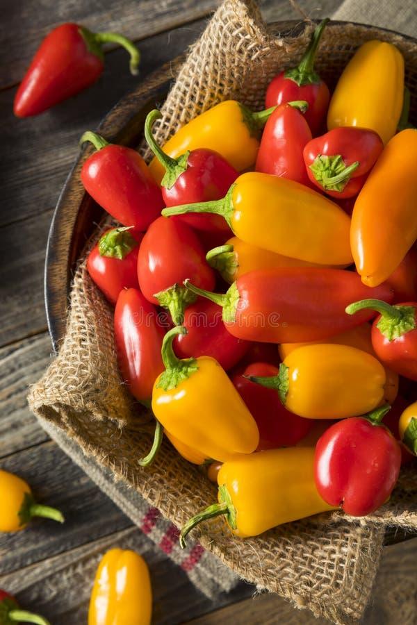 Ruw Organisch Mini Sweet Peppers royalty-vrije stock foto's