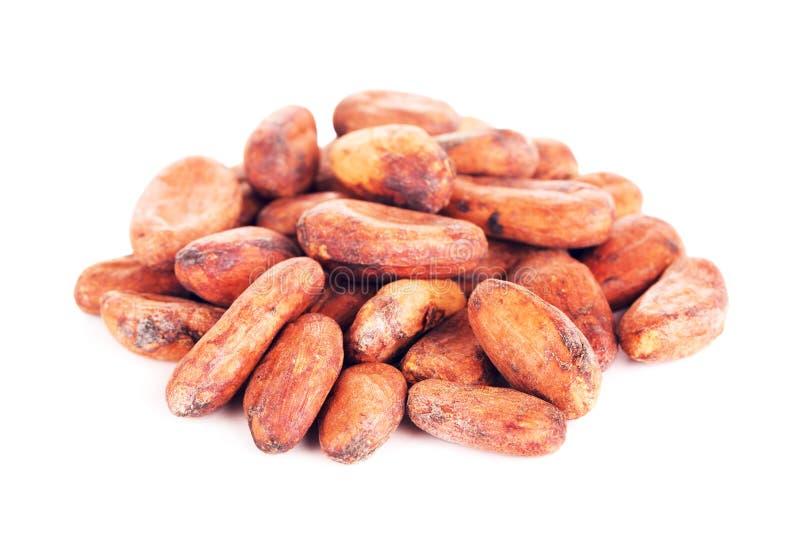 Ruwe cacaobonen stock afbeeldingen