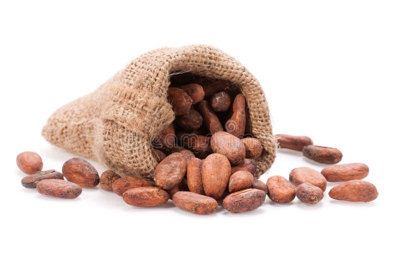 Ruwe Cacaoboon stock afbeelding