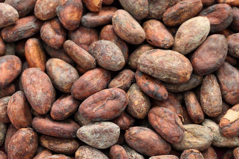 Ruwe cacaocacaobonen royalty-vrije stock afbeeldingen