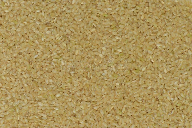 Ruwe de rijstachtergrond van Japan, de ongepelde rijst van Japan royalty-vrije stock fotografie