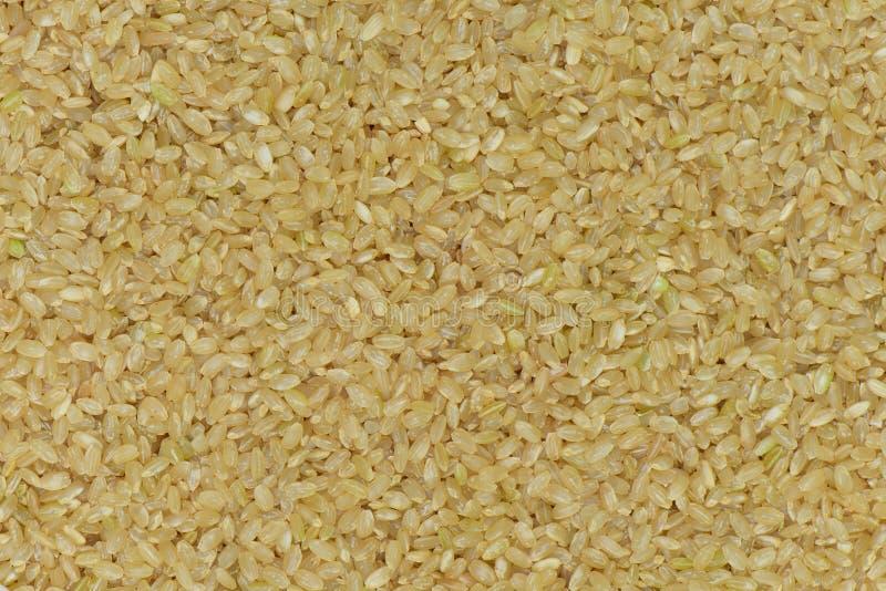 Ruwe de rijstachtergrond van Japan, de ongepelde rijst van Japan royalty-vrije stock foto