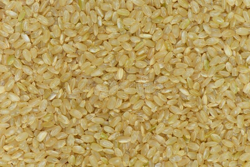 Ruwe de rijstachtergrond van Japan, de ongepelde rijst van Japan voor gezond stock fotografie