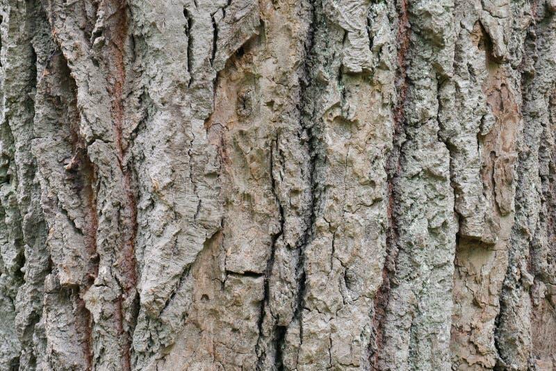 Ruwe dichte omhooggaande de zomerdag van de boomschors in het bos royalty-vrije stock foto's