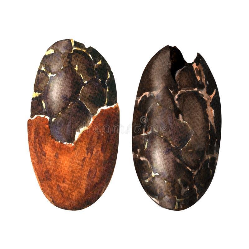 Ruwe die cacaobonen op een witte achtergrond worden geïsoleerd royalty-vrije illustratie
