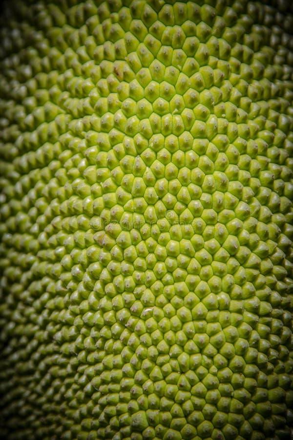Ruwe groene textuur en van dicht omhoog jonge jackfruit gebruikt zoals stock afbeelding