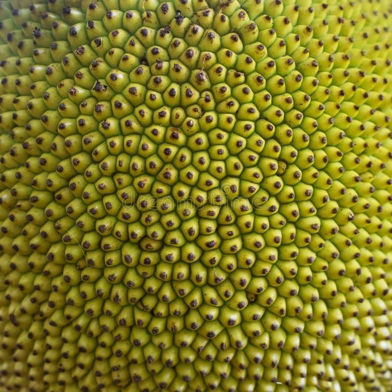 Ruwe groene textuur Sluit omhoog van jonge jackfruit, populair Aziatisch fruit royalty-vrije stock afbeelding