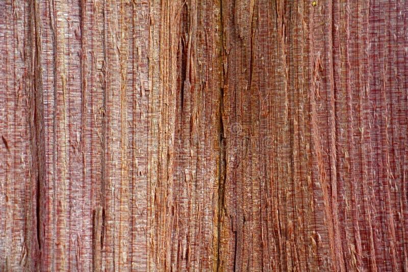 Ruwe houten korrel, Juniperus Virginiana stock afbeeldingen