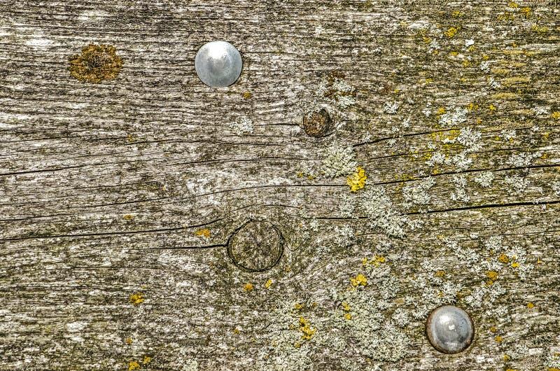 Ruwe houten oppervlakte met twee glanzende bouten royalty-vrije stock foto