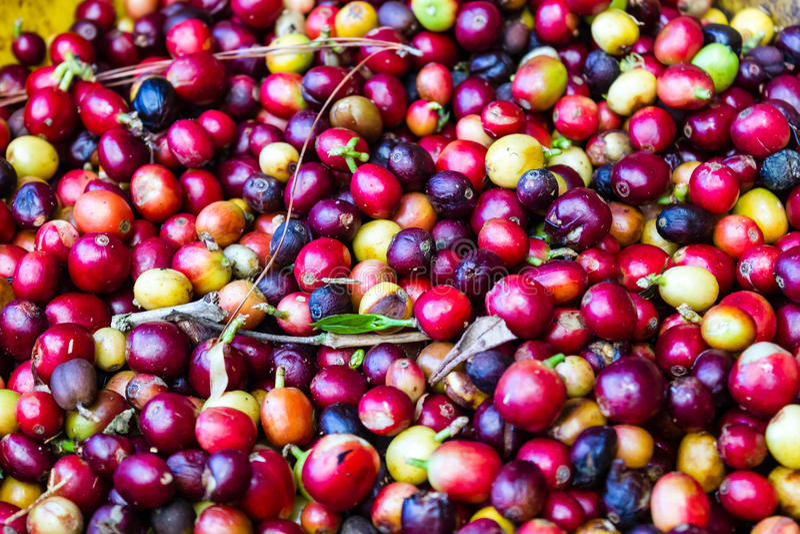 Ruwe koffiebonen royalty-vrije stock foto