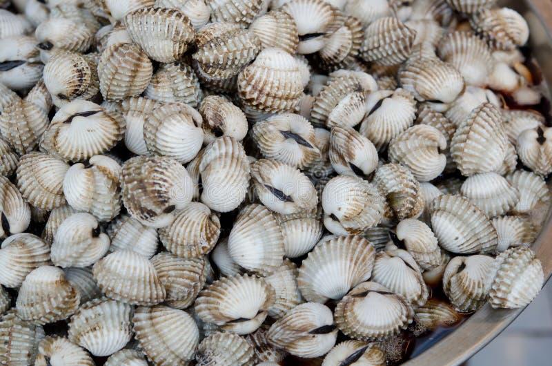 Download Ruwe kokkels stock foto. Afbeelding bestaande uit zeevruchten - 29513074