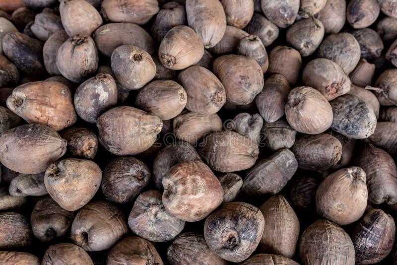 Ruwe Kokosnoten stock foto