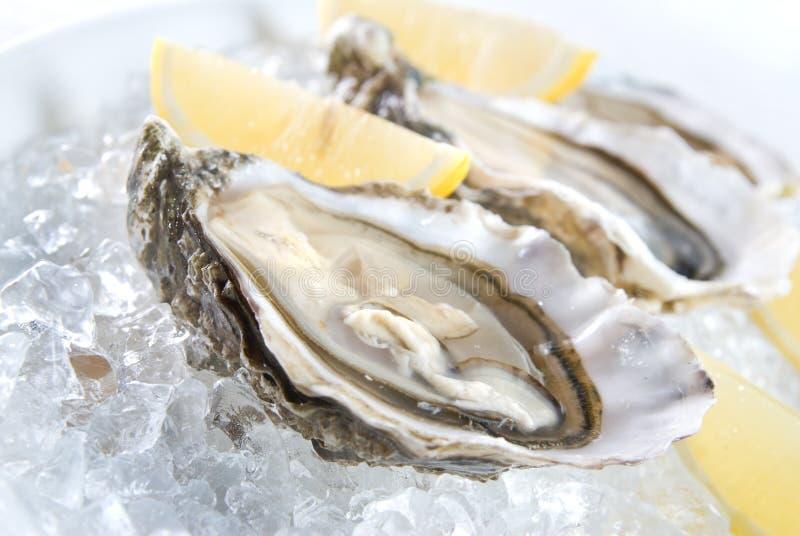 Ruwe oesters met citroen stock foto