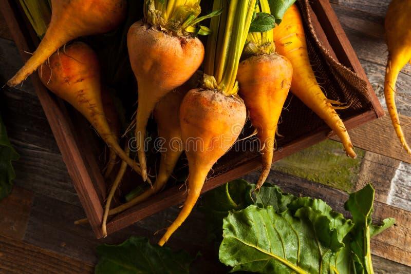 Ruwe Organische Gouden Bieten stock foto's