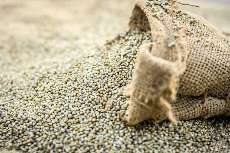 Ruwe organische Pennisetum-glaucum, Parelgierst die uit een jutezak komen Concept Honger stock foto's