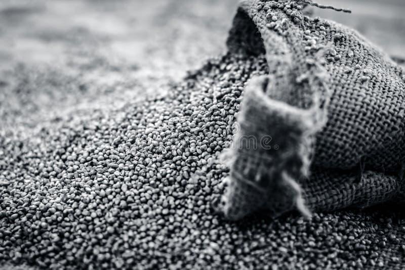 Ruwe organische Pennisetum-glaucum, Parelgierst die uit een jutezak komen Concept Honger stock afbeelding