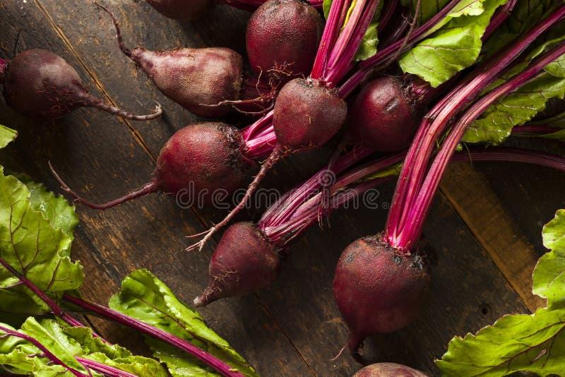 Ruwe Organische Rode bieten stock fotografie