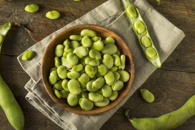 Ruwe Organische Verse Groene Fava Beans stock foto