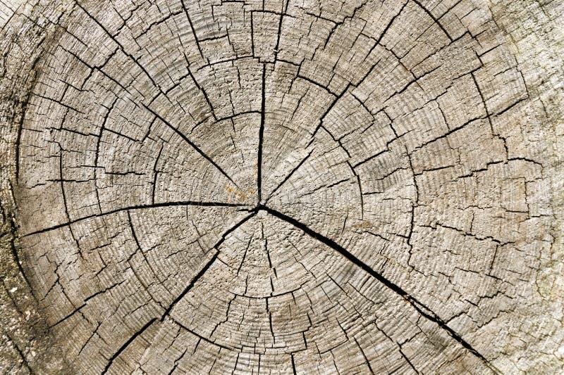 Ruwe oude gebarsten houten geweven boomringen Het logboekplak die van de besnoeiingsboom leeftijd en jaren tonen stock afbeeldingen