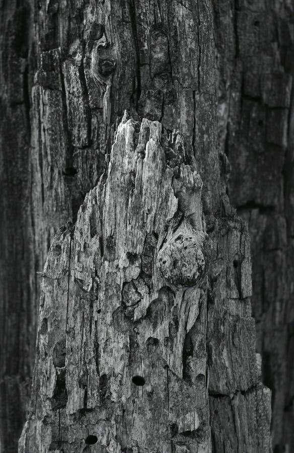 Ruwe schors op een boom royalty-vrije stock afbeeldingen