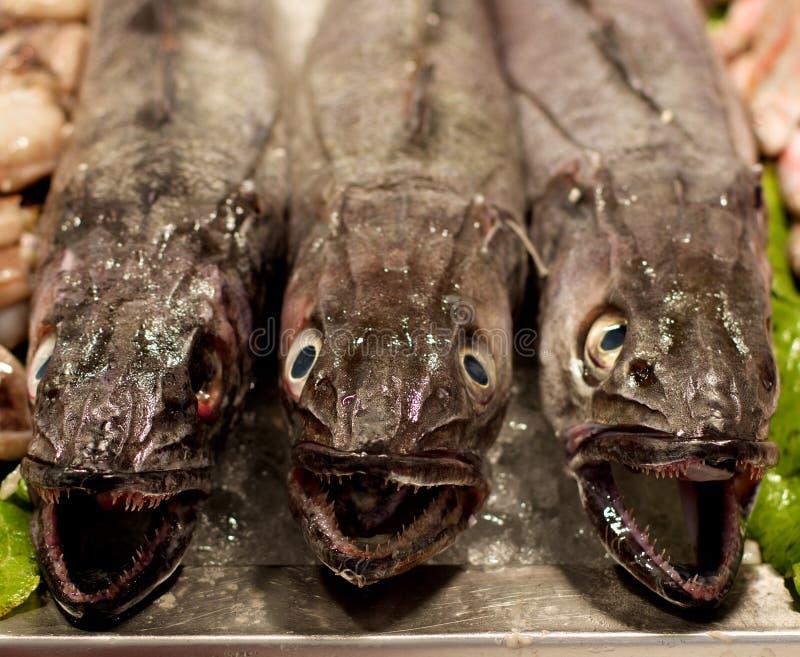 Ruwe Verse Stokvissenvissen royalty-vrije stock afbeelding