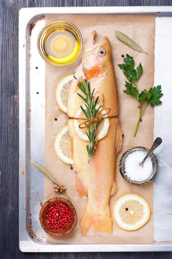 Ruwe vissen gouden forel met kruiden en kruiden royalty-vrije stock foto