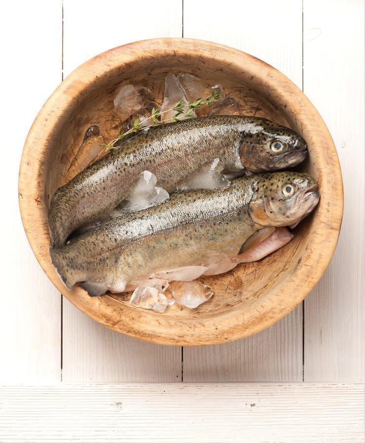 Ruwe vissenforel royalty-vrije stock foto's