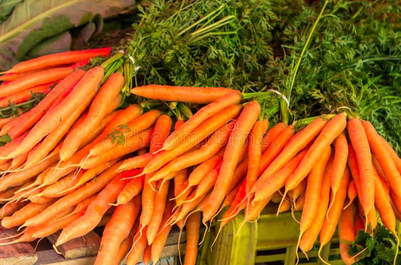 Ruwe wortelen van de tuin stock afbeeldingen