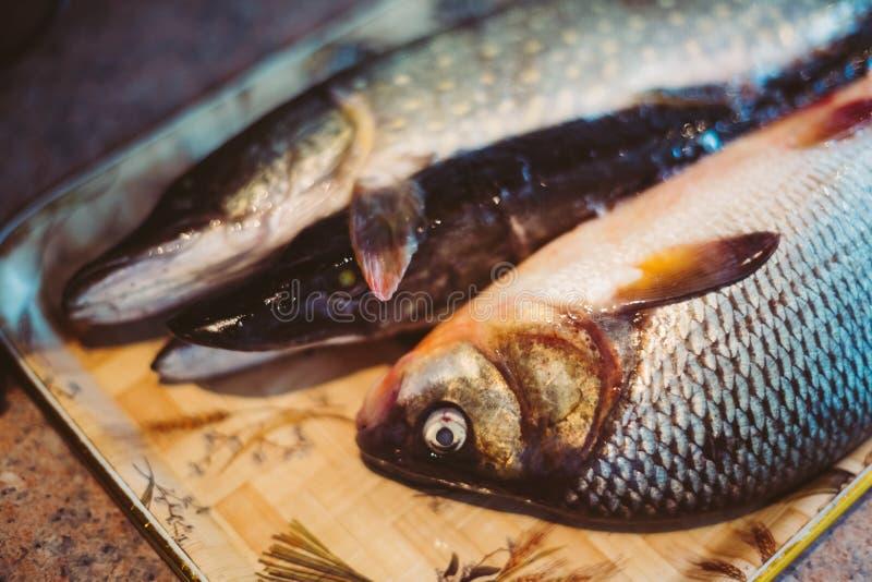 Ruwe Zoetwatervissenkarper en Snoeken stock foto