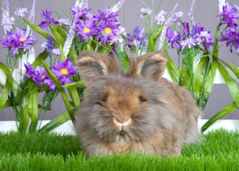 Ruwharig angora konijntje in de tuin royalty-vrije stock foto's