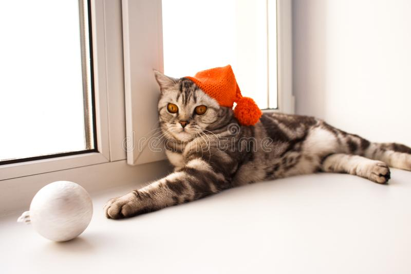 Ruwharige bruine kat stock fotografie